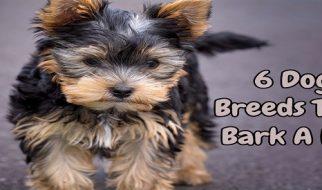 Six Dog Breeds That Bark A Lot